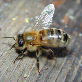 1-bee.jpg