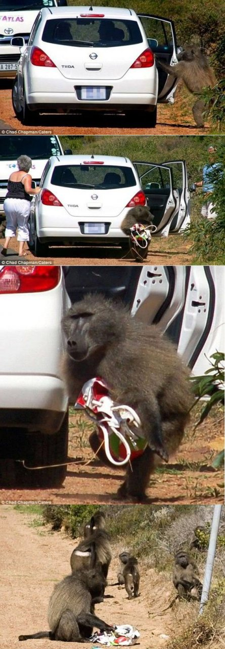 baboon-money.jpg