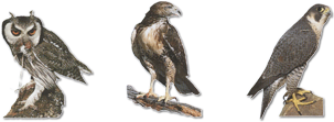 birds-of-prey-small.png
