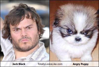 jack-black-tll-angry-puppy.jpg