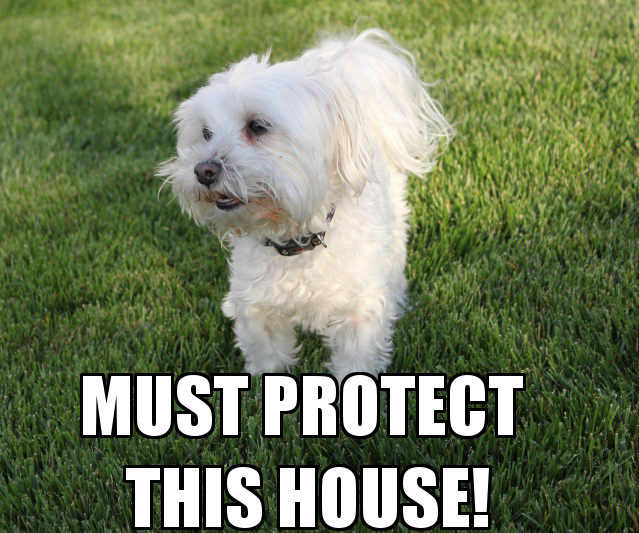 must_protect_this_house.jpg