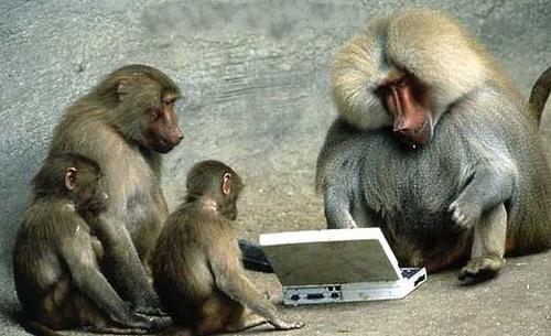 xfaddon baboon.jpg