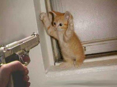 Kitten_and_gun.jpg