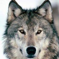 Ramon Wolfs