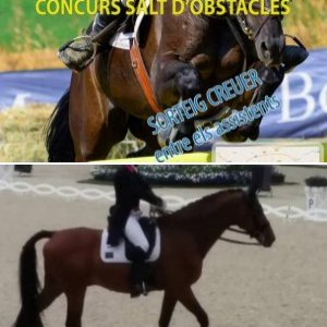 Horses and Dressage