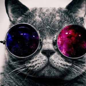 Cat_face_glasses_thick_65455_1920x1080