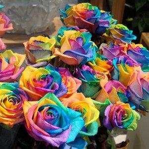 rainbow 0002.jpg