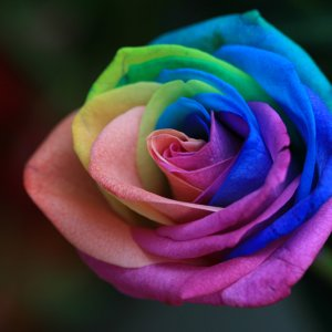 rainbow_0005.jpg