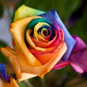 rainbow_0006.jpg