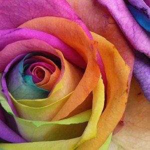 rainbow_0008.jpg